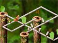 As formigas precisam da sua ajuda para guardar os alimentos em seus devidos lugares, para isso direcione cada formiga para seu destino correto, divirta-se neste jogo.