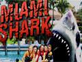 Jogo Miami Shark, Tudo estava super tranquilo nas praias da Cidade de Miami, até um poderoso tubarão aparecer por lá, você esta no controle de terrível e perigoso tubarão, acabe com tudo e todos que estiver em sua frente, pegue impulsos para conseguir destruir uma enorme quantidade de objetos e pessoas.