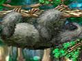 Super Sloth - Controle os movimentos da preguiça. Mostre suas habilidades com o teclado, acertando a sequência e apertando os botões no momento certo para que o bichinho comece a se mover, mas seja rápido.